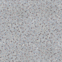 Cosmos Pygmy Nuthatch, a hand-cut stone mosaic, shown in polished Carrara, Lavender Mist, Celeste.