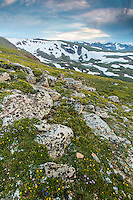 Alpine environment on the Beartooth Plateau of Northwest Wyoming