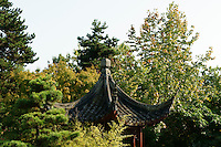 Chinese pagoda and trees in Sun Yat-sen Park, Chinatown, Vancouver, BC, Canada                     .