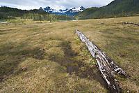 Upland bog near Columbia Bay, Prince William Sound, Alaska