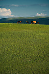 Mongolian ponies graze the grasslands of Inner Mongolia in northern China.