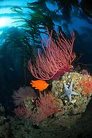 California marine life photos