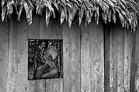 A Colombian settler watch out of the window of his wooden house deep in the jungle of Amazonia, Colombia, 26 April 2004. Amazonia is the world's largest dense tropical forest area. Since the 16th century the original indigenous people have been virtually pushed away or exterminated. The primal ancient unity between tribes and the jungle ambient has changed into a fight between the urban based civilization and the jungle enviroment. Although new generations of white and mestizo settlers have not become adapted to the wild tropical climate and rough conditions, they keep moving deeper into the virgin forest. The technological expansion causes that Amazonia is changing rapidly.