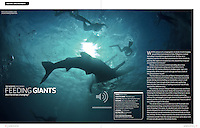 Article about the controversial Oslob whale shark feeding in Asian Diver