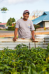 Willie Tabios, the owner of The Rising Sun coffee, at his home with his seedling coffee plants in the village of Na'alehu in the district of Ka'u on the Big Island of Hawaii, USA, America