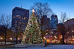 Boston's Christmas tree in Boston Common, Boston, MA