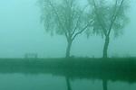 Park bench with trees along shoreline in fog sunrise at Lake Washington Seattle Washington State USA