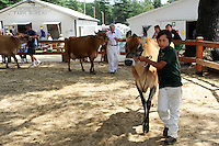 Farmers with their cows at cattle show at Cheshire Fair in Swanzey, New Hampshire USA