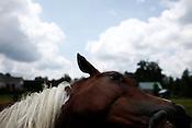 Triangle Equine Rescue