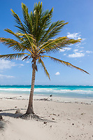 White sand beach and palm tree near Tulum, Mexico
