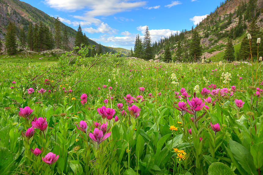 A patch of pink paintbrush fills the meadow on a hike to Booth Lake near Vail, Colorado. These Rocky Mountain wildflowers are beautiful in late July and bring color to a majestic landscape.