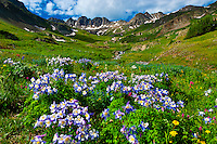 USA-Colorado-American Basin-Wildflowers