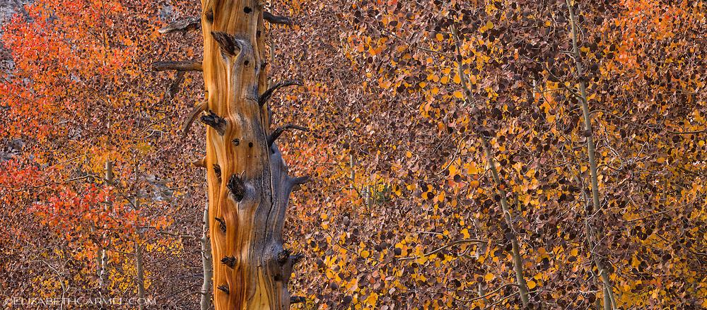 Aspen Collage
