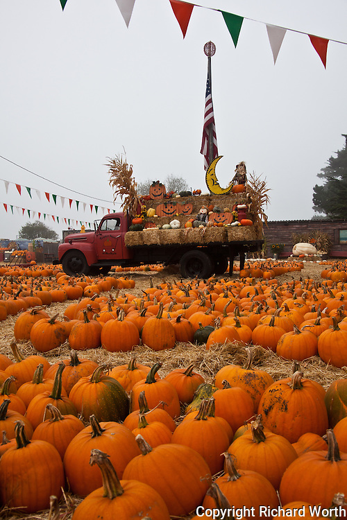 Pumpkins galore and the Depot's old red truck waiting for customers at Pumpkin Depot in Half Moon Bay.