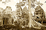 Buttress Roots, Banteay Kdei, Cambodia
