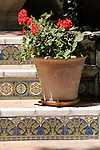Red flowers on tiled steps in the garden of the Sorolla Museum in Madrid, Spain.