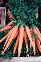 FOOD GROUPS: ROOT VEGETABLES<br /> Carrots