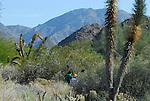 Living Desert Reserve, hikers and Mt. Eisenhower
