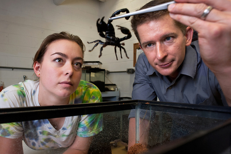 Allison Durkee (left) and assistant professor Daniel Hembree (right) examine a scorpion as they pose for a portrait in professor Hembree's laboratory. Photo by: Ross Brinkerhoff.
