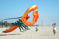 Aerospace Engineer, Wayne Brooks flies his giant inflatable lobster kite at Santa Monica Beach on Sunday, September 18, 2011.