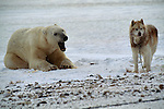 A polar bear and Arctic Eskimo rest after playing together in Hudson Bay, Manitoba, Canada.