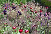 Purple fennel (Foeniculum vulgare 'Purpureum' amid Astrantia, Paeonia peonies, iris, Salvia