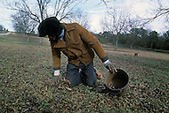 December 1976. Plains, Georgia. After the crop season, poor blacks collect the remaining pecans from the ground.