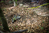Human remains and clothings found during demining activities by Norwegian People's Aid (NPA) in Srebrenica area. After the enclave had been stormed by Bosnian Serb troops hundreds of people tried to escape through mined area.