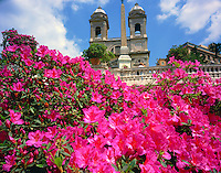 Azaleas at The Spanish Steps (location of Keats' death), Trinita dei Monti Church beyond, Rome, Italy