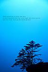 A single tree on ledge with a blue sky background on the Oregon Coast
