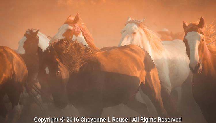 Horses running wild through the dust - Wyoming