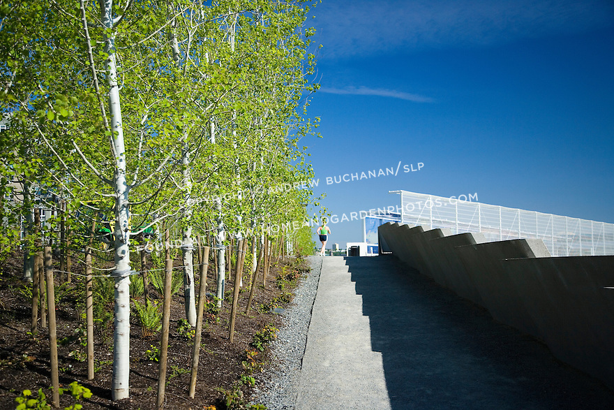 """A lone jogger heads for the overpass that carries the Park over the train tracks and connects the waterfront, or Shore, portion of the Park with the Meadows, the Grove, and the Valley portions.  At left are aspens that help provide the gateway from one """"zone"""" to another.  SAM's Olympic Sculpture Park, Seattle, WA."""