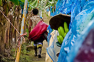 A young Costa Rican worker walking under the aircable on the banana plantation near Puerto Limon, Costa Rica, 1 September 2004. Eighty percent of the exported bananas in the world are grown in Latin America. Local farms have no other alternative than to sell for a price offered by the multinational company. When working conditions and ecology is in question, the corporations do not have any responsibility as they do not own plantations. Local governments in the attempt of organizing banana export provide low duty taxes on export, they try to eliminate social and enviromental politics to attract the big companies to their countries.
