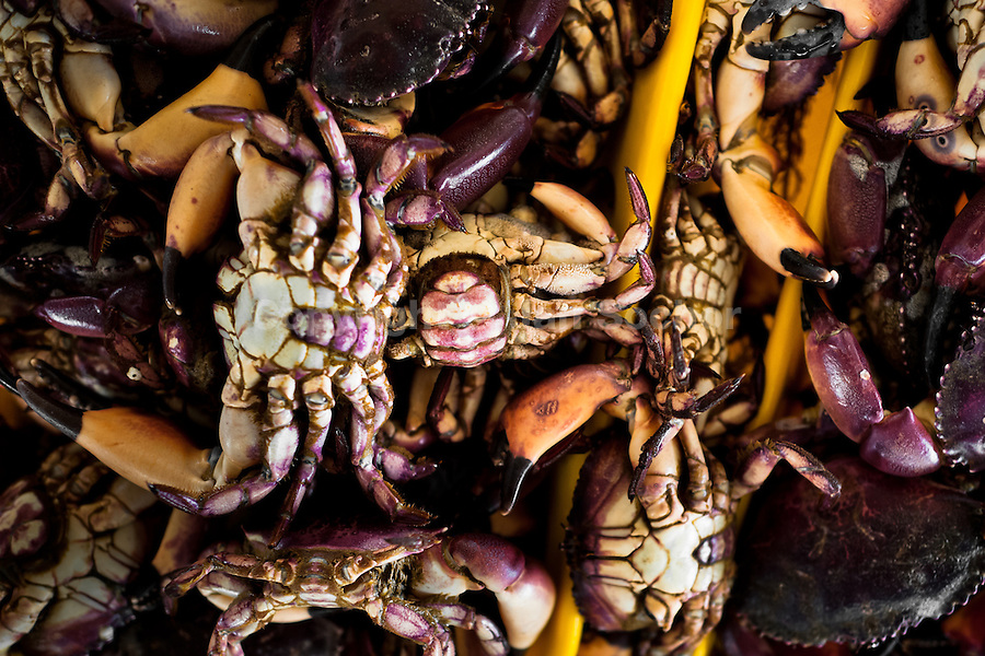 Crabs for sale are seen at Chorrillos seafood and fish market in Lima, Peru, 31 March 2013.