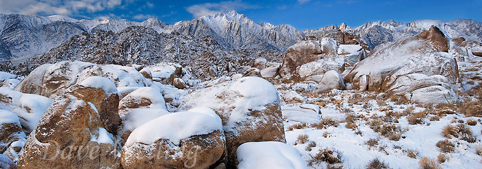 902000030 panoramic view winter sunrise with snow covered desert plants and granite boulders in the bureau of land management protected land the alabama hills in the southern section of the eastern sierras with mount whitney lone pine peak  and mount russell in the background in kern county california