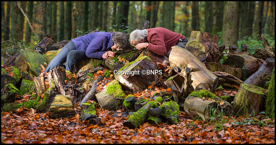 BNPS.co.uk (01202 558833)<br /> Pic: PhilYeomans/BNPS<br /> <br /> Fungi fanatics John and Doreen Bailey closely inspect fungi at Tyntesfield.<br /> <br /> Funghi fest, A National Trust estate untouched by modern fertilisers and chemicals has revealed an unrivalled collection of over 1000 different species of fungi, some identified for the first time, by a eccentric couple of fungi fanatics.<br /> <br /> The Tyntesfield estate bought by the Trust for &pound;25 million in 2002 has been revealed as one of the top places in Britain for mushrooms, with more than 1,000 varieties identified within its small grounds.<br /> <br /> Fungi fanatics John and Doreen Bailey have spent the last 10 years tirelessly scouring 150-acre Tyntesfield cataloguing every single mushroom they find including one never-seen-before type.<br /> <br /> They say that the sheer diversity of fungi they have found is thanks to the absence of modern farming techniques and the unique combination of woodland and grassland at the National-Trust-owned estate near Bristol, Somerset. <br /> <br /> Ironically, Tyntesfield is the ancestral home of businessman William Gibbs who made his fortune in the 1800s importing guano - bird excrement -  from South America for use as fertiliser.