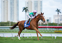 HALLANDALE BEACH, FL - MARCH 04: SUFFUSED, #3, ridden by Jose L. Ortiz, wins the 29th running of The Very One (Grade III) at Gulfstream Park Race Course on March 4, 2017 in Hallandale Beach, Florida. (Photo by Samantha Bussanich/Eclipse Sportswire/Getty Images)