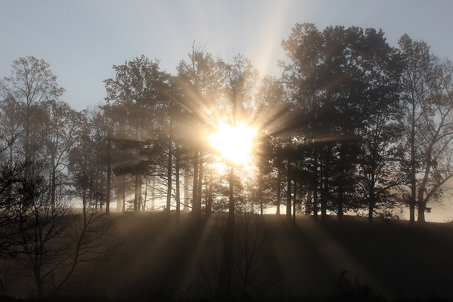 Fog and sunlight sets through the trees in the early morning hours in Madison County, VA. Photo/ Andrew Shurtleff