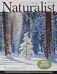 Nelson Kenter photo of snow falling on small tree in a forest used on a magazine cover