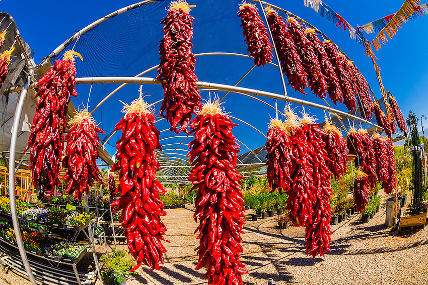 Ristras (drying red chile pepper pods), Jericho Nursery, Albuquerque, New Mexico USA