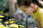 Young girl in yellow shirt looking at giant swallowtail perched on a yellow flower at the Woodland Park Zoo butterfly exhibit Seattle Washington State USA