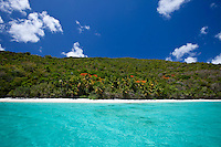 Flamboyant trees in bloom<br />