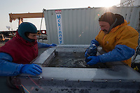 Scientists set zooplankton collecting bottles into an incubator of seawater on deck of a research ship. Their experiment will show what copepods eat in spring in the Bering Sea.