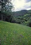 grasslands and oak woodlands at Sunol Regional Wilderness