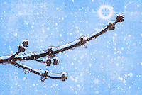 Frozen twig with filters