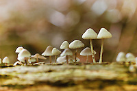 paddenstoelen en schimmels, toadstools and mushrooms