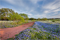 This was the beginning of one of the most beautiful evenings in my years of searching for Texas wildflowers. A storm had passed and the clouds were beginning to break up. In about 30 minutes, those same clouds would be lit in orange and pink and blue, making a beautiful canopy over a sea of bluebonnets near San Saba.