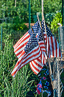 American flags in a community garden.
