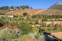 South Africa.  Delaire Graff Winery, near Stellenbosch.