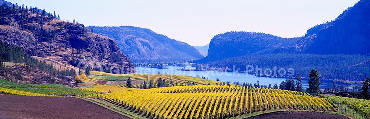 "Vineyards at ""Vaseux Lake"", South Okanagan Valley, BC, British Columbia, Canada - Vaseux Lake Migratory Bird Sanctuary - Panoramic View"